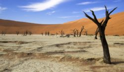 Combatting climate change: boosting green investment in Africa with the AFAC initiative